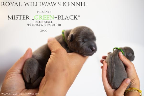 greenblack.jpg