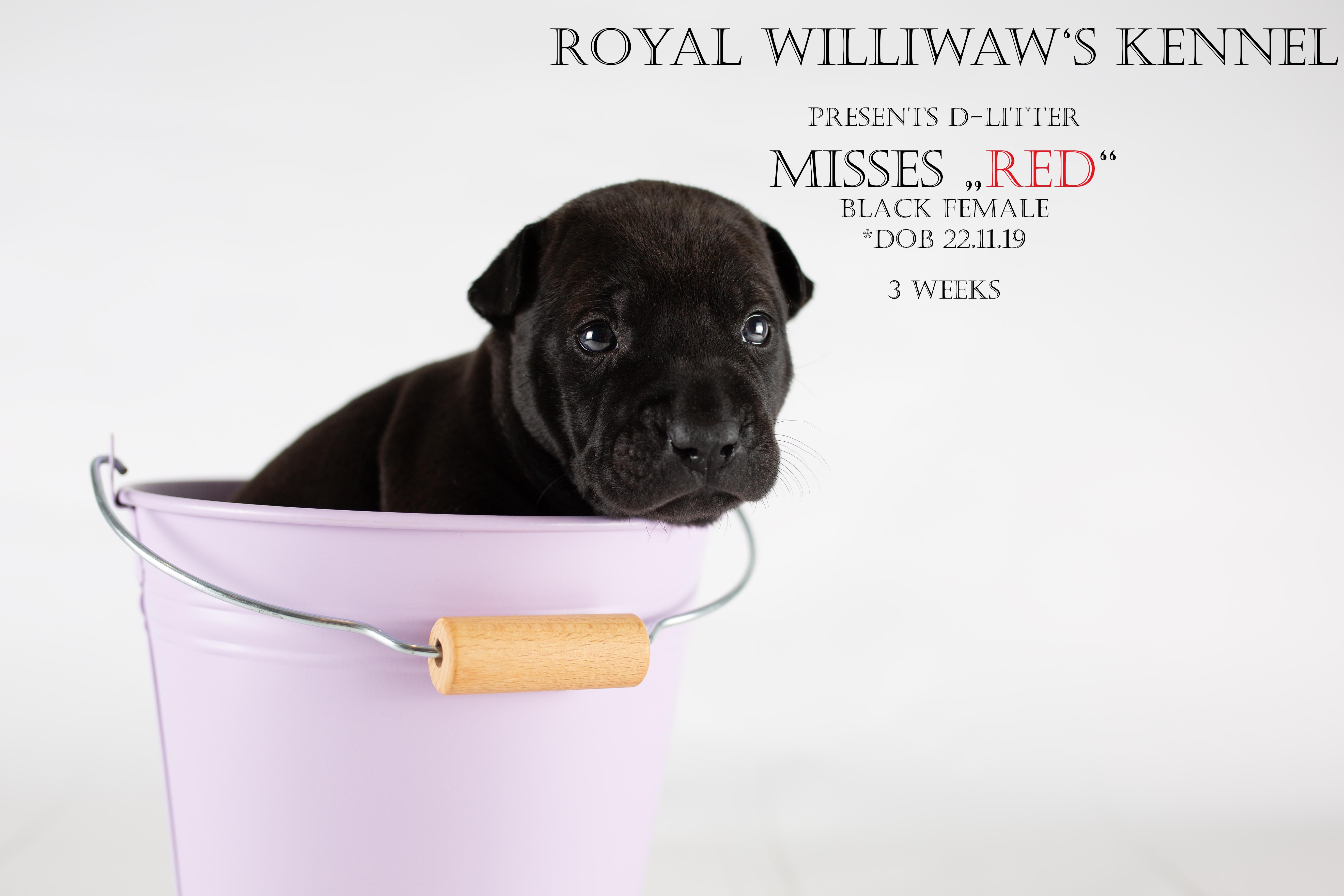 RW_red_3weeks_unbeschriftet