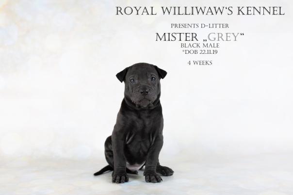 RW_Grey_4weeks